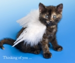 Angel Kitten, Thinking of You
