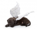 Black Lab Puppy Angel