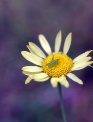 grasshoppergratitude