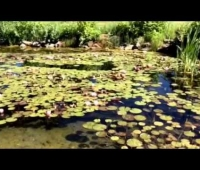 Mile High Lilly Pond Meditation