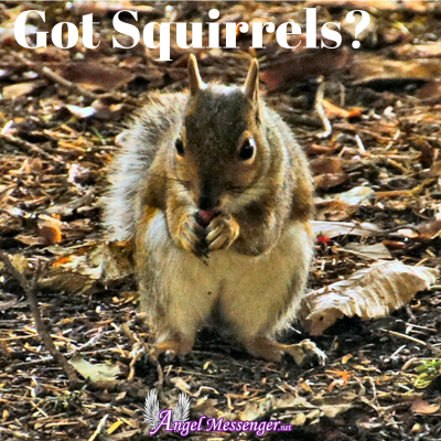Got Squirrels-