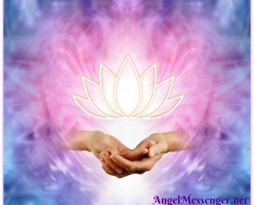 Sacred Lotus Image