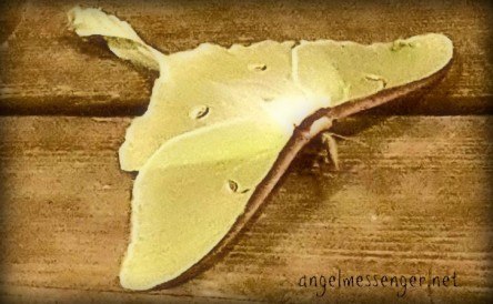 Signs from Grandpa - Luna Moth