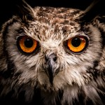 photodune-4691782-owl-xs