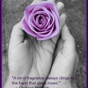 rose proverb